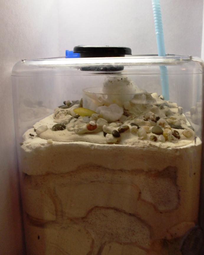 Домашние муравейники как сделать
